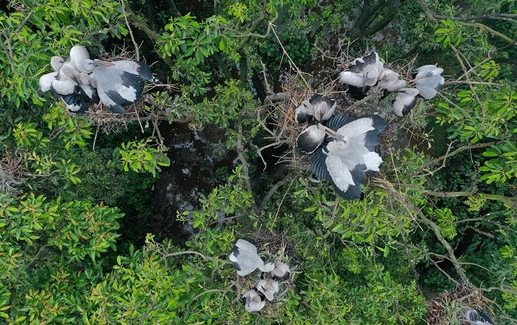 বগুড়ার শেরপুরের রামনগর এখন 'পাখি পল্লী' নামে পরিচিত