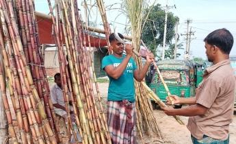 শিবগঞ্জে আখ বিক্রি করে লাভবান হচ্ছে ক্ষুদ্র ব্যবসায়ীরা