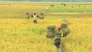 করোনায় কাজ হারিয়েছে ৬২ শতাংশ মানুষ, খাওয়া কমিয়েছে ৫২ শতাংশ