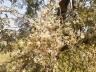 বদলগাছীতে সজনের বাম্পার ফলনের সম্ভাবনা