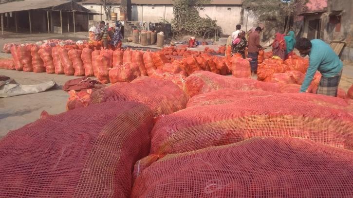 বগুড়ার বিষমুক্ত আলু-বাঁধাকপি যাচ্ছে বিদেশে, যাবে কচুও