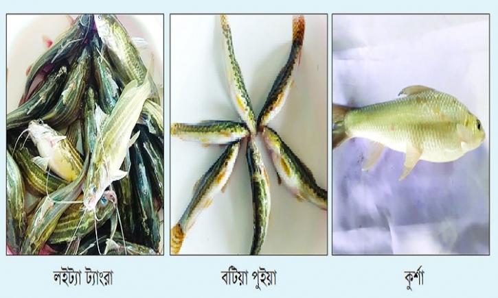 দেশের উত্তরাঞ্চলে ফিরছে বিলুপ্তপ্রায় তিন জাতের মাছ