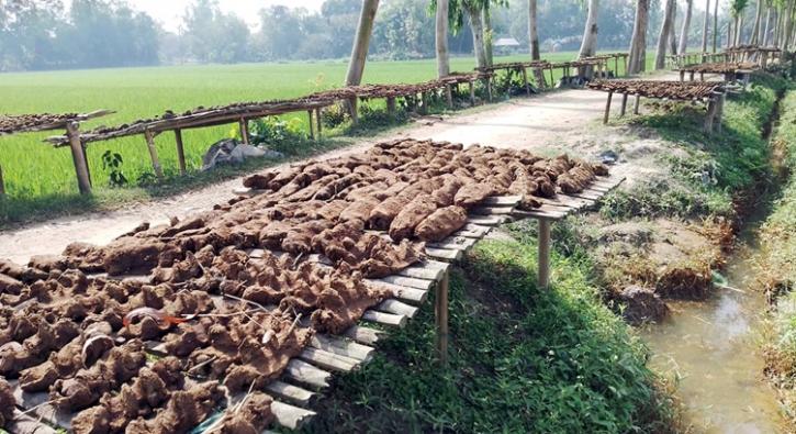 শেরপুরেগোবরের জ্বালানিতেই সংসারে ফিরেছে স্বচ্ছলতা